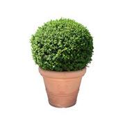 Bild: Pflanzen