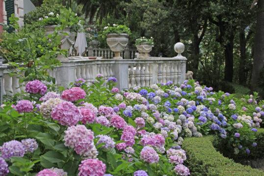Vorgarten Idee im barocken Stil – farbenfrohe Blumen & Hecken kombiniert...
