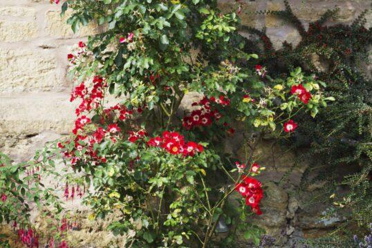 Hauswand Idee – Hausfassade mit wildem Bewuchs und schönen Blumen