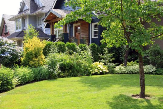 Schöner Vorgarten mit einzelnem Laubbaum auf einer Wiese