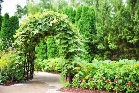 Gartenidee – An kurvigem Gartenweg ordentlich angelege Gemüsebeete – du...