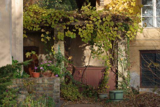 Gartenidee – Bewachsenes Vordach im Hinterhof direkt an der Hauswand