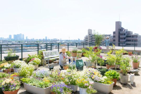 Idee für die Dachterrasse – Die Dachterrasse als grüner Erholungsort im Herze...