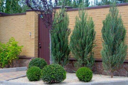 Steingarten vor hoher Gartenmauer mit einzelnen Pflanzen