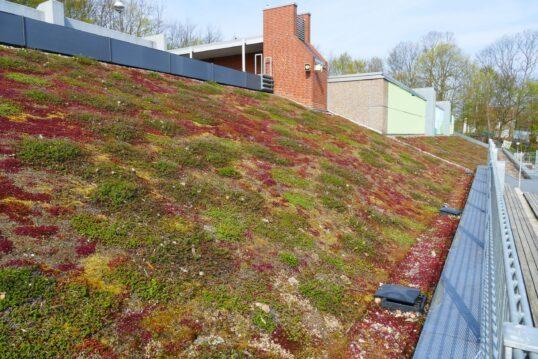 Dachbegrünung zum nachmachen – Idee für ein modern gestaltetes Dach leichter ...