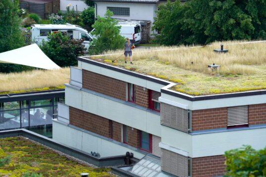 Dachbepflanzung Idee – Moderne Gebäude mit bepflanzten Dächern und Kies