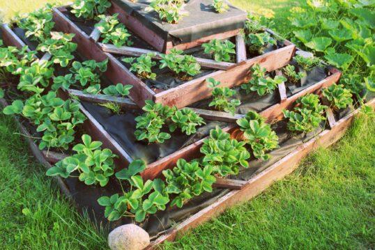 Hochbeet Gartenidee – Dekoratives Hochbeet mit verschiedenen Pflanzen
