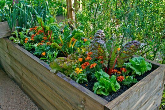 Schrebergarten Idee mit Hochbeet – Hochbeet aus Holz mit verschiedenen Blumen...