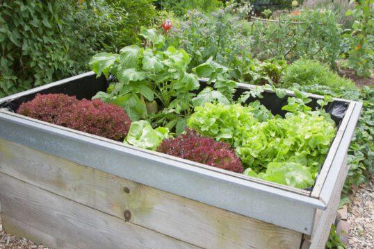 Gartenidee – Angepflanztes Gartengemüse im Hochbeet