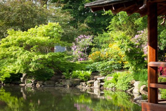 Prächtiger japanischer Garten mit vielen Pflanzen und großer Wasserfläche