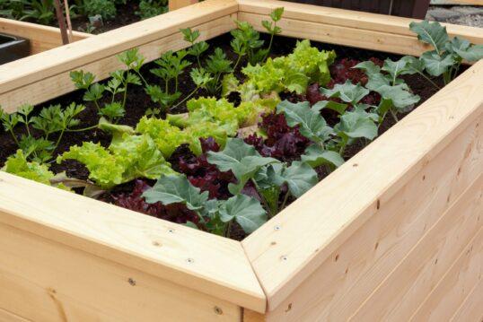 Gartenidee mit modernen Hochbeeten aus Holz für optimalen Salat-und Gemüseanbau ...