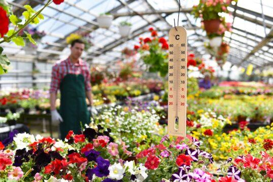 Gewächshaus im Garten Idee – Großes helles Gewächshaus mit vielen Blumen und ...