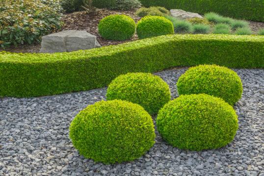 Idee für einen Kiesgarten – Beispiel mit modern getrimmte Buchsbaumhecken auf...