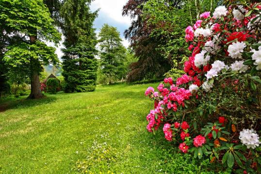 Pflegeleichte Gartenidee – Grüne Wiese zwischen bunten Blumensträuchern &...