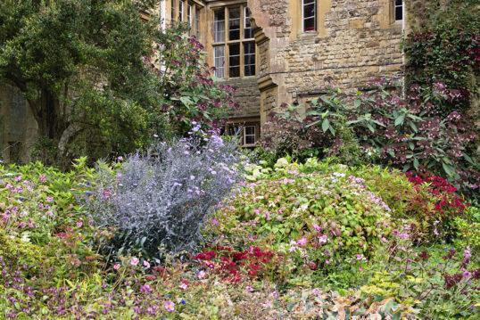 Vorgarten Idee Kleiner Verwildeter Vorgarten Mit Uriger Atmosphare