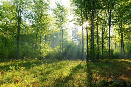 Idee für einen Park oder großen Garten – Kleine Lichtung im Laubbaumwald