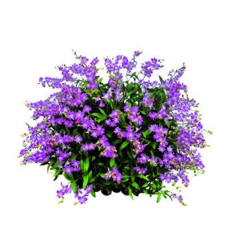 Gartenpflanzen online kaufen