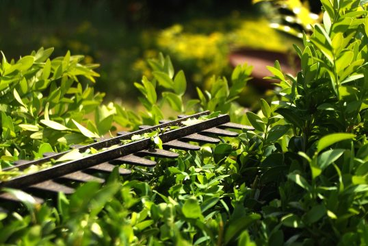Gartenidee – Buchsbaumhecke wird in Form getrimmt