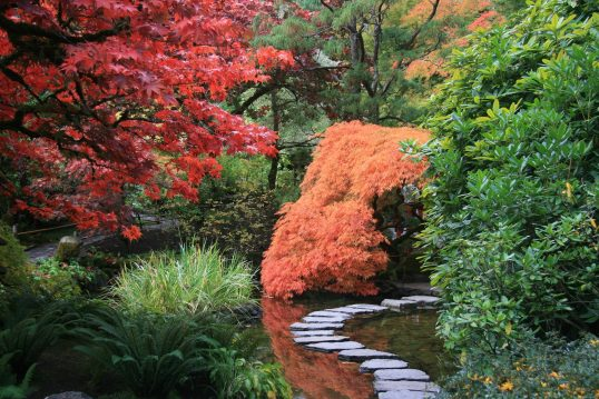 Asiatische Gartenidee – Asiatischer Garten mit Gartenweg  diversen Laubbäumen...