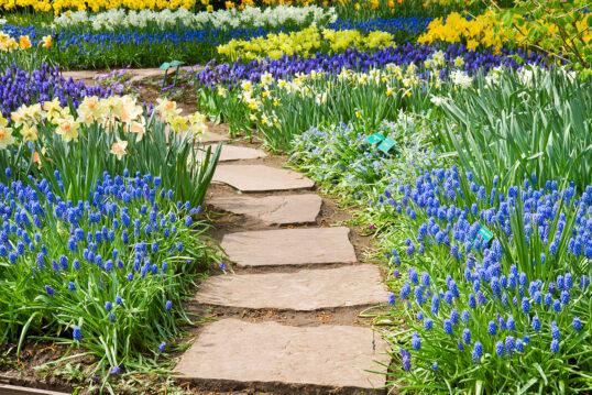 Gartenidee mit Gartenweg – Botanischer Garten mit prachtvollen Blumen und Gar...