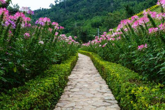 Traumhafter Gartenweg mit gepflegten immergrünen Hecken & schönen Blumen
