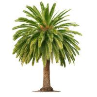 Mediterrane Pflanzen günstig online kaufen
