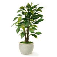 Terrassenpflanzen günstig online kaufen