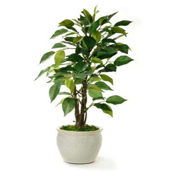 Terrassenpflanzen online kaufen
