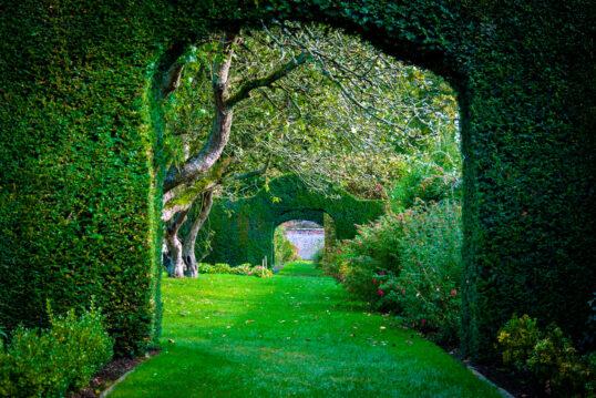 Gartengestaltung mit einem natürlichen Torbogen aus einer Hecke geschnitten –...