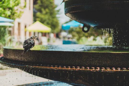 Gartenidee mit einem schönen Steinbrunnen – stilvolle Vogeltränke