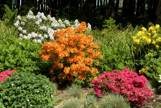 Idee für den Garten – Beispiel mit bunten Büschen und Blumen auf einem Beet