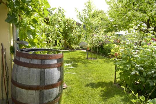Gartenidee Beispiel – Holzfass an der Hauswand im Landhausgarten mit Obstbäum...
