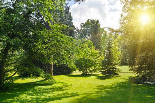 Park Idee mit vielen Laubbäumen  Nadelbäumen & einer gepflegte Wiese – B...