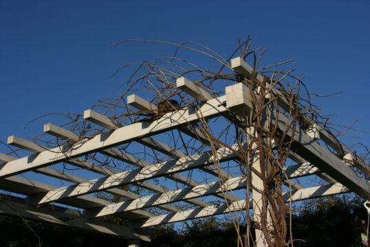 Gartenidee mit einer Pergola aus Holz mit bepflanztem Dach – Beispiel mit Kle...