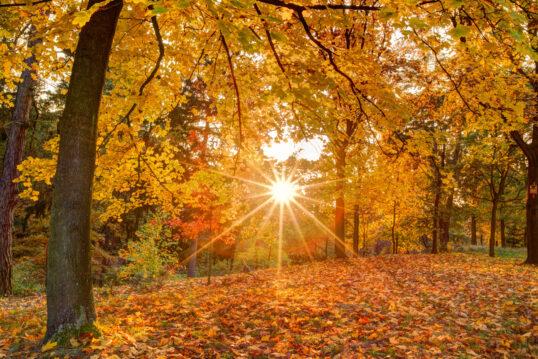 Schöne Park Idee – Herbstlicher Park mit vielen Bäumen & Waldsträuchern...