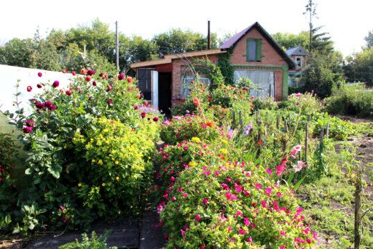 Gartenidee – Kleines Landhaus mit Wildgarten – Beispiel mit Rosenbüsche...