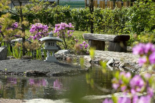 Idee für einen asiatischen Feng Shui Garten mit rosa Zwergrhododendren – Japa...