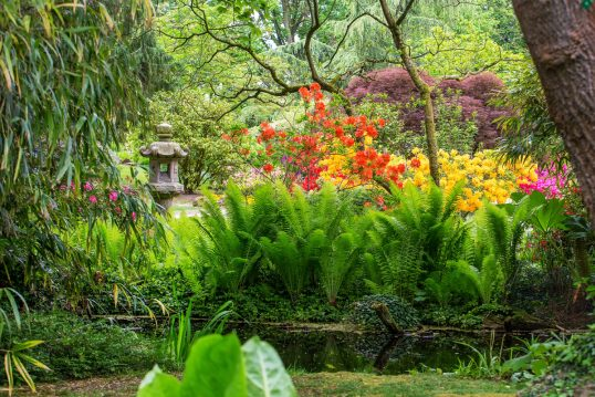 Gartenidee – Orangefarbene & gelbe Rhododendren im japanischen Garten &#...