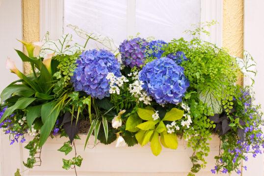 Deko Idee zum Nachmachen für die Fensterbank außen mit einem bepflanzten Blumenkast...