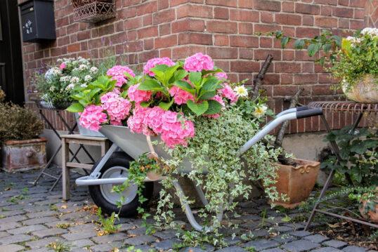 Deko Idee für den Hauseingang – Beispiel mit einer bepflanzten Schubkarre mit...