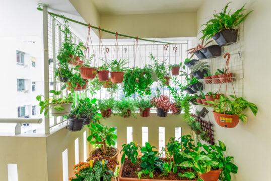 Idee für die Balkongestaltung – Grüne Oase mit Kletterpflanzen in Blumenampel...