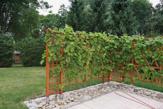 Idee für den Garten mit einem Rankgitter aus Holz an der Terrasse als Sichtschutz &...