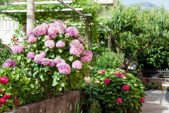 Gartenidee mit Blumen – Beispiel mit rosa Hortensien & roten Rhododendre...