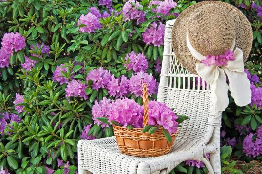 Deko Idee für den Garten – Weißer Rattanstuhl vor einer Hecke mit blühenden l...