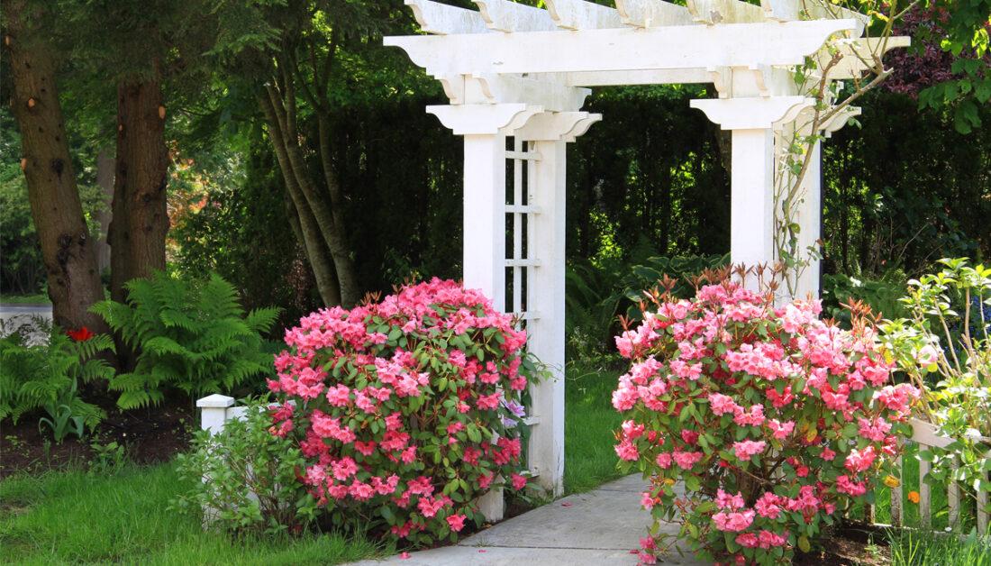 Rhododendron pflanzen  schneiden & düngen ▷ Top-50 Sorten