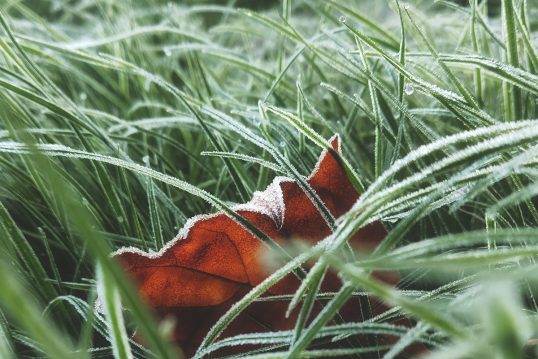 Eisheilige 2021 – Alle Infos zu Namen  Datum & Bauernregeln im Überblick