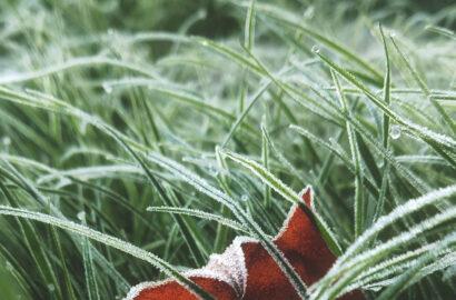 Eisheilige 2021 Pflanzen
