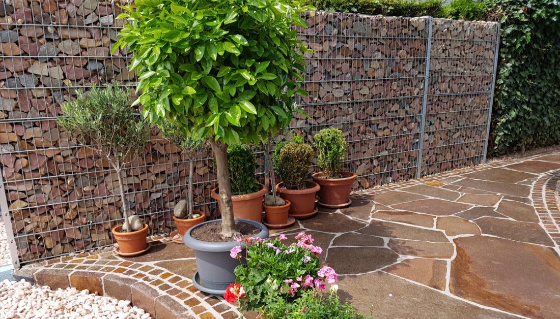 Gartenidee - Gabionenzaun als Sichtschutz an der Terrasse - viele Pflanzgefäße aus Terracotta mit kleinen Bäumchen