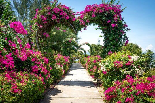 Rhododendron pflanzen  schneiden & düngen – Top-50 Sorten im Überblick