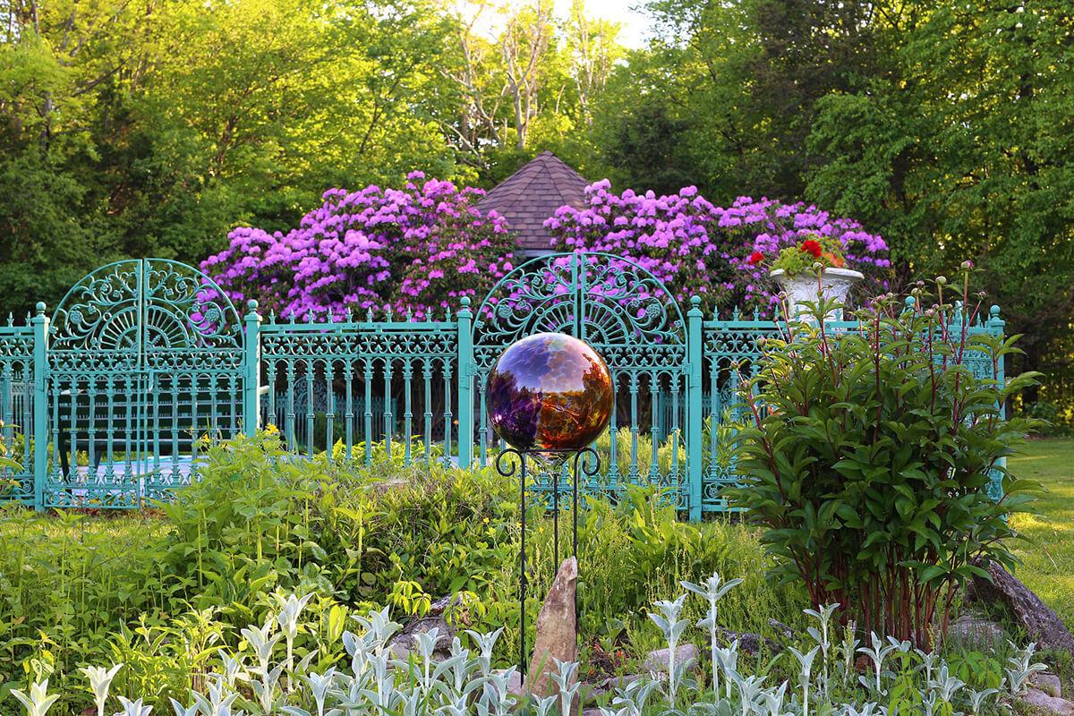 Cottage-Garten mit großer Rhododendron-Pflanze in Violett